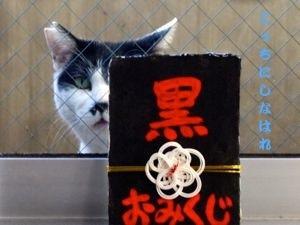255mikuji-3.jpg