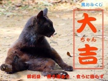 255mikuji-5.jpg