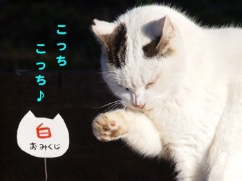299kuji-2.jpg