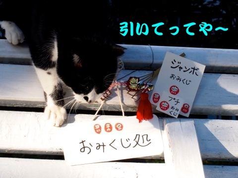 346kuji-1.jpg