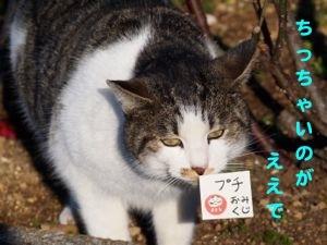 346kuji-3.jpg