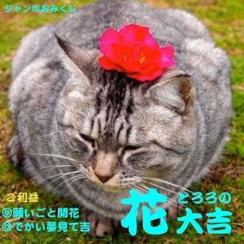 346kuji-4.jpg
