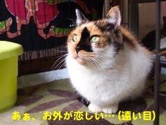 306buchi-3.jpg