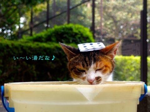 377iiyu-1.jpg