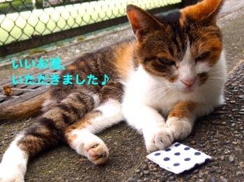 377iiyu-10.jpg