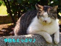 377iiyu-6.jpg