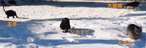 397yuki-4.jpg