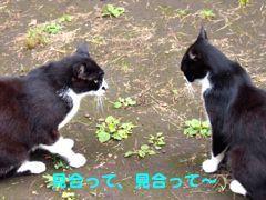417sumo-4.jpg