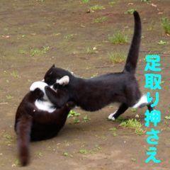 417sumo-7.jpg