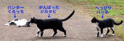 424han-8.jpg
