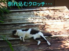 429yuku-4.jpg