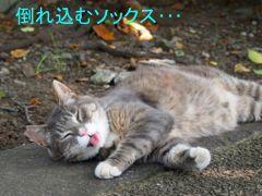 429yuku-5.jpg