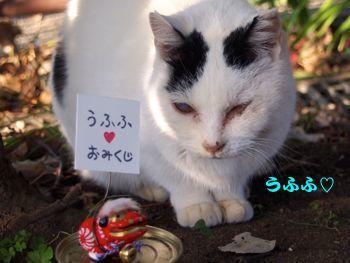 443kuji-2.jpg