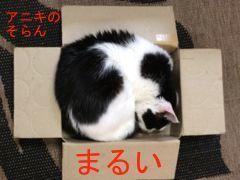 B55hako-4.jpg